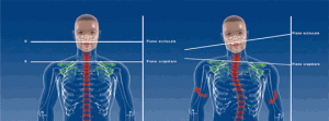 modelli-corpo-posturologia
